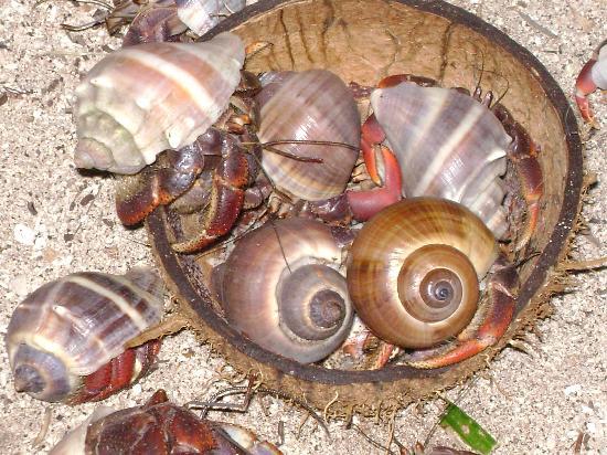 Sin Duda Villas : Even the hermit crabs exist on natural resources
