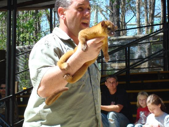 Valdosta, GA: Kinkajou at the Creature Feature show