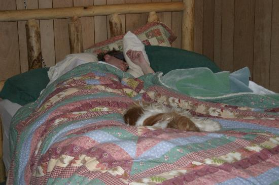 Pemi Cabins: Husband and dog- sleeping comfortably!