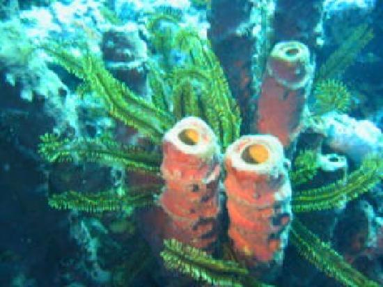 ALDive & W.A.T.E.R Sports: Sponges