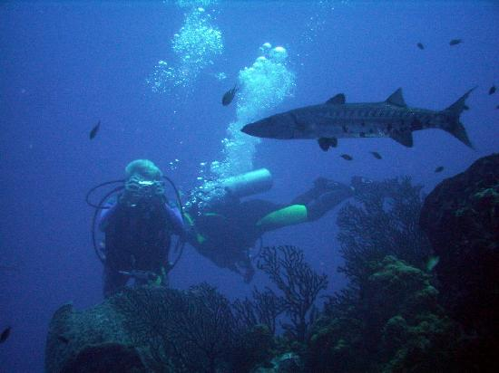 ALDive & W.A.T.E.R Sports: Me photographing a Barracuda
