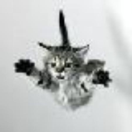Fleetcat