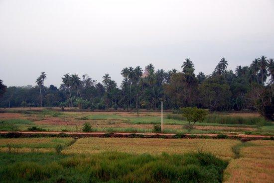 Nilketha Villa Eco Hotel: vu sur la rizière avec un stupa