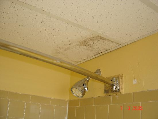 Lafayette Motel : Mold on the batroom ceiling