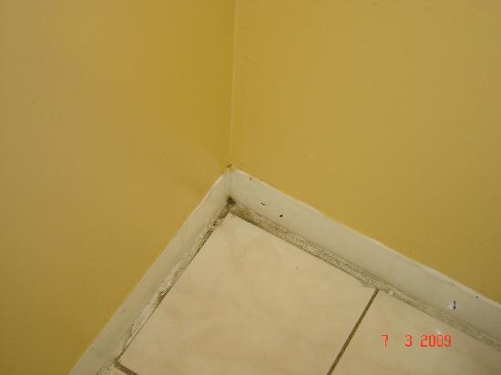 Lafayette Motel: Floor mold