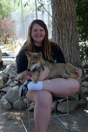Lucerne Valley, Californië: Holding a wolf pup