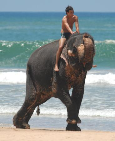 Bentota, ศรีลังกา: ballade sur la plage