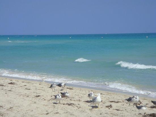 Miami Beach, FL: La plage