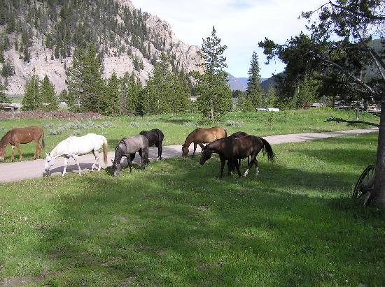 Views From Cabins Picture Of Covered Wagon Ranch