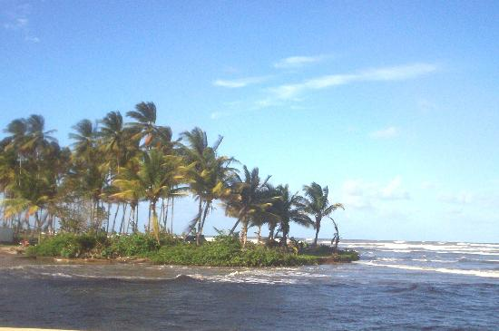 Coconut Cove Holiday Beach Club: Island of Coconut trees-Driving along road leaving manzanilla