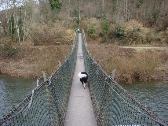 Ross On Wye Dog Walks