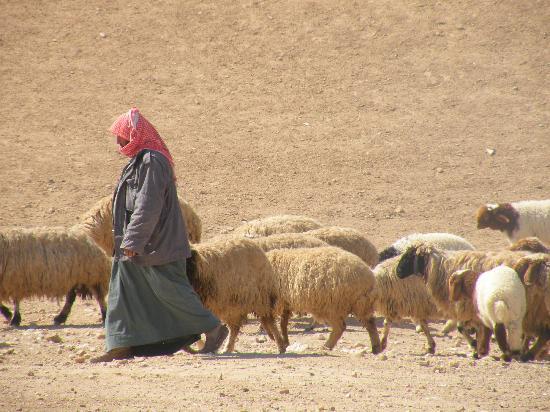 Syria: Resafa (Sergiopoli)