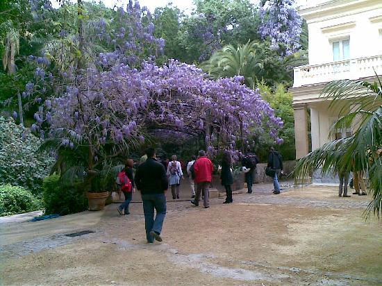 La Concepcion Jardin Botanico Historico de Malaga: la glicinia en marzo