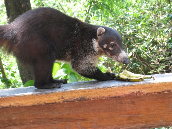 Jenna's River Bed and Breakfast: Animals at the Reserva