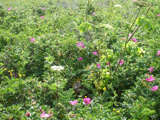 Wakka Genseikaen : 色々な花です。