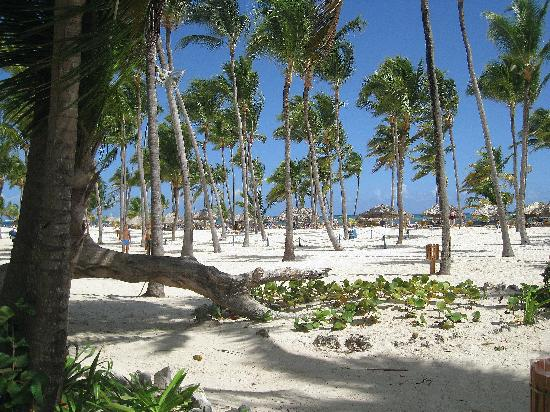 Plage De L Hotel Picture Of Catalonia Bavaro Beach