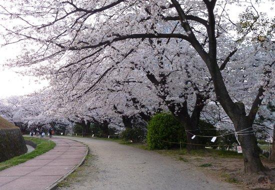 Fukuoka, Japan: 大きく張り出した枝