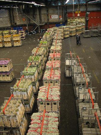 Royal FloraHolland Aalsmeer: trains of flowers rolling to the auction