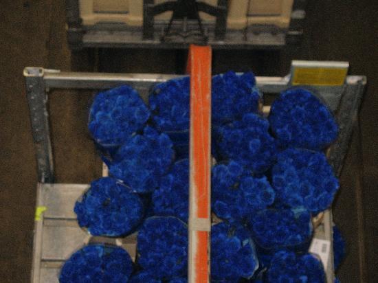 Royal FloraHolland: rare blue long stem roses