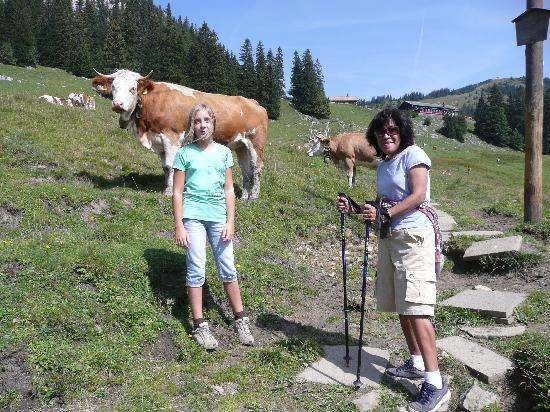 Schliersee, Alemania: friendly cows on the mountain