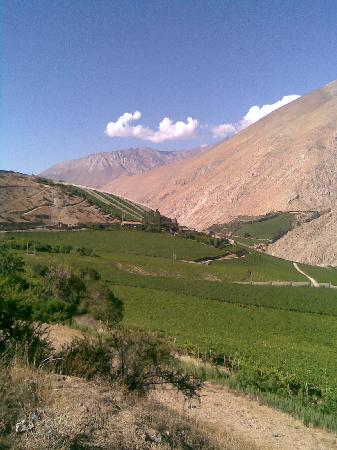 El Galpón Pisco Elqui: SUN MOST DAYS OF TE YEAR