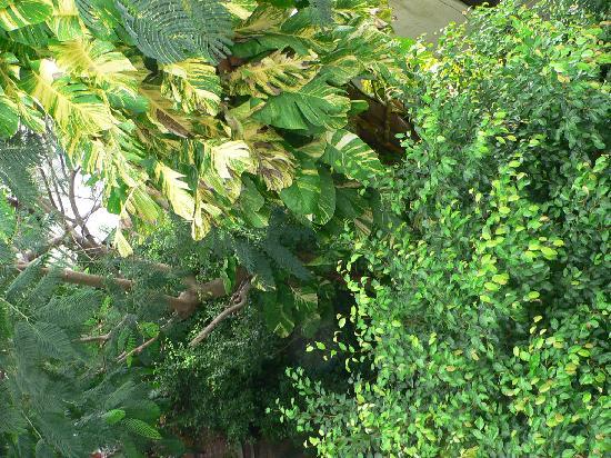 Paraiso Azul's -Casa De Gopala: garden