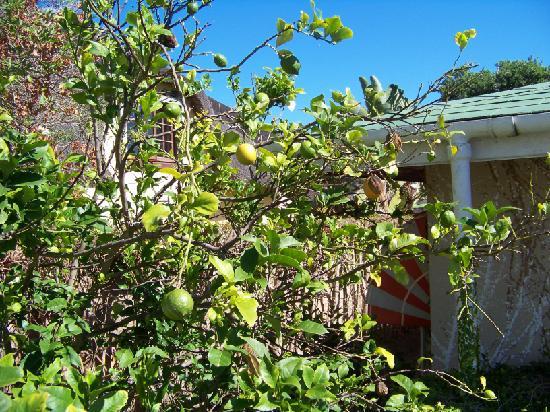 Cottage Pie: In the beautiful garden