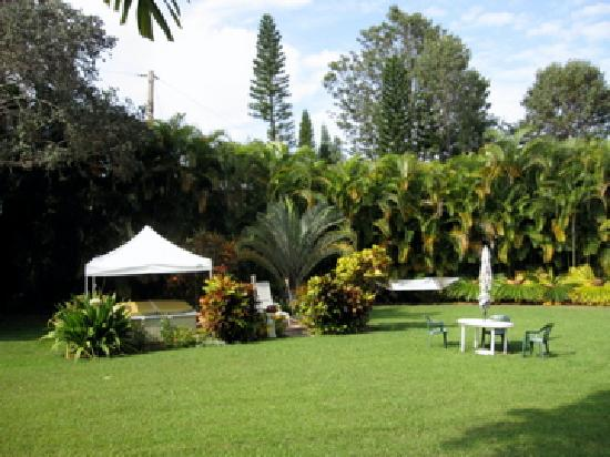 Areca Palms Estate Bed and Breakfast: Jacuzzi area and back yard