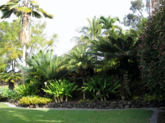 Areca Palms Estate Bed and Breakfast: Beautiful grounds