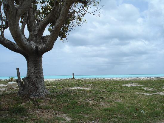 Antigua : The Nest beach ...looked neon blue!