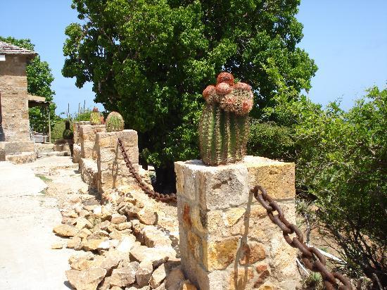 Antigua: Shirley's Heights