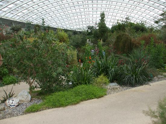 National Botanic Garden of Wales: Interior of the Great Glasshouse