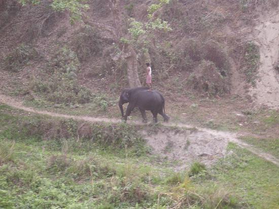 Gorumara National Park, India: Einer der Elefanten mit Mahoud