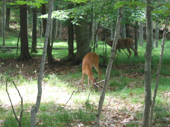 Fish Creek, WI: deer on the bike trail