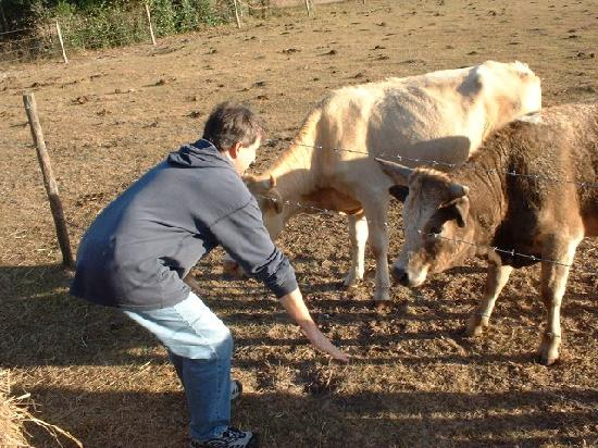 The Smoakhouse Ranch: dad playing with the cows