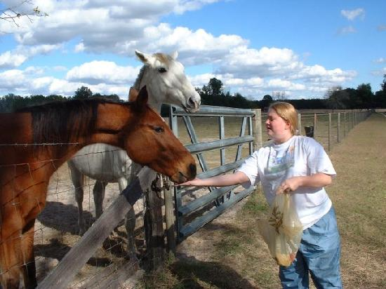 The Smoakhouse Ranch: daughter feeding cookies to cows