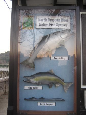 Winchester Dam: One side of the species display