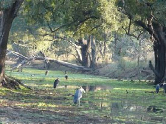 Tena Tena Camp: Glade with Heron
