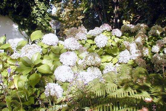 Constantia Stables: Romantic garden at the B&B