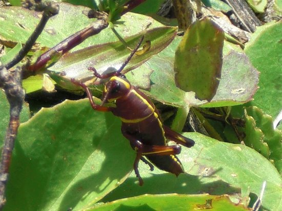 Parc national des Everglades, Floride : bug