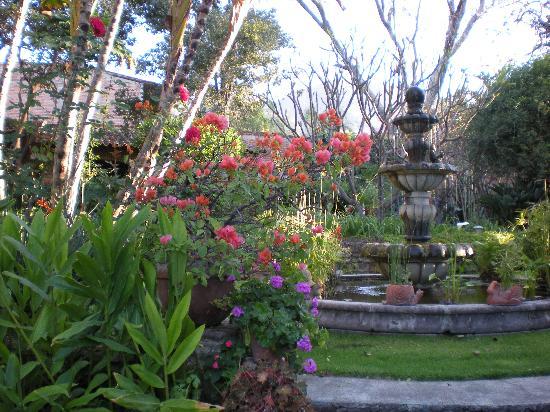 Los Artistas B & B: a view of the garden....