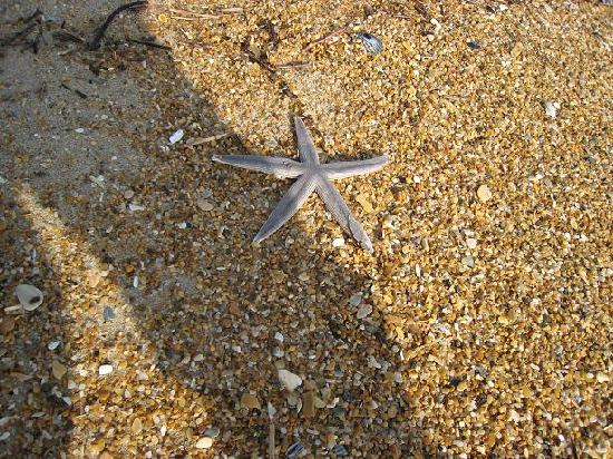 Sanderling Resort: Starfish and sand