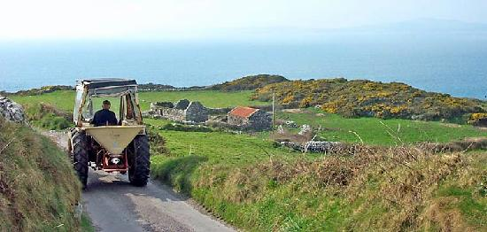 Cape Clear Island Holiday Hostel: Rush hour on Cape Clear