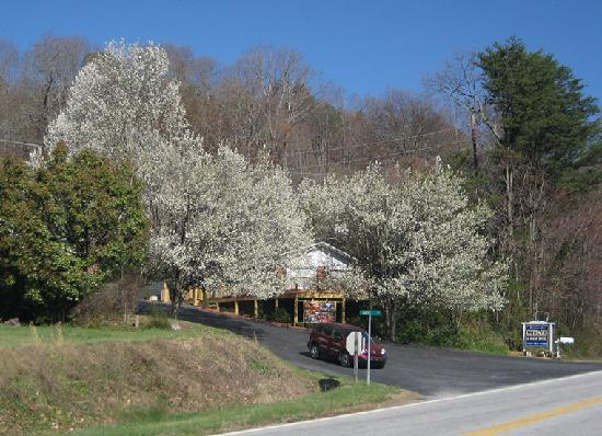 Mountain Aire Cottages & Motel: Everything is under the trees away from the road
