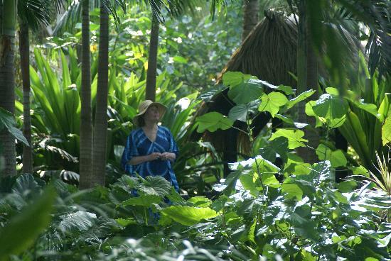 Pacific Resort Rarotonga: View from Garden Room