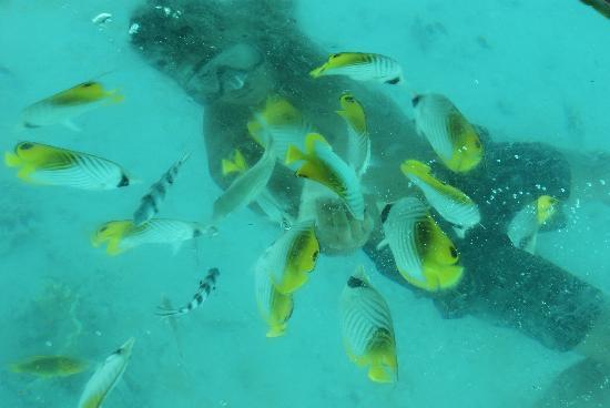 Pacific Resort Rarotonga: Feeding the fish