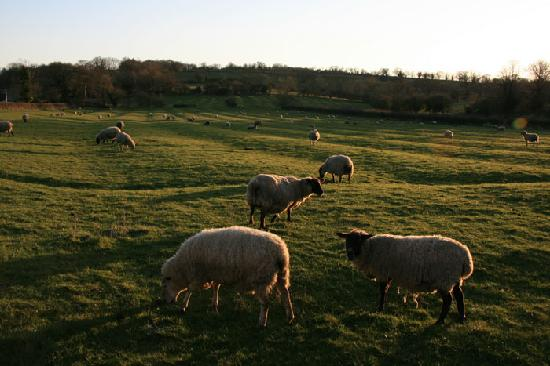 Meadow Rise Guest House : The Meadow at Meadow Rise. Great bedroom view across the sheep!