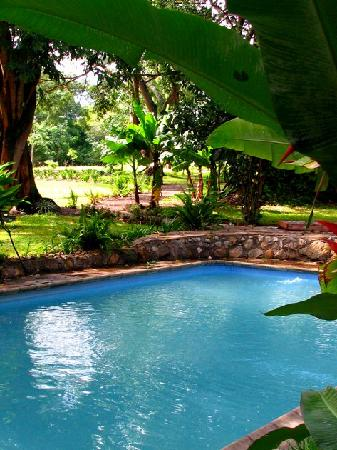 Rivertrees Country Inn: clean pool to dip your toes in!