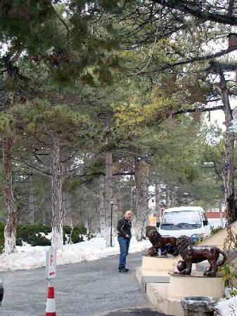 Harlek Thermal Hotel: Trees in front of the hotel