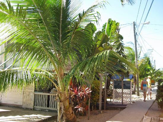 Westwind Hotel on the Beach: Placencia's sidewalk walkway - behind the Westwind Hotel.